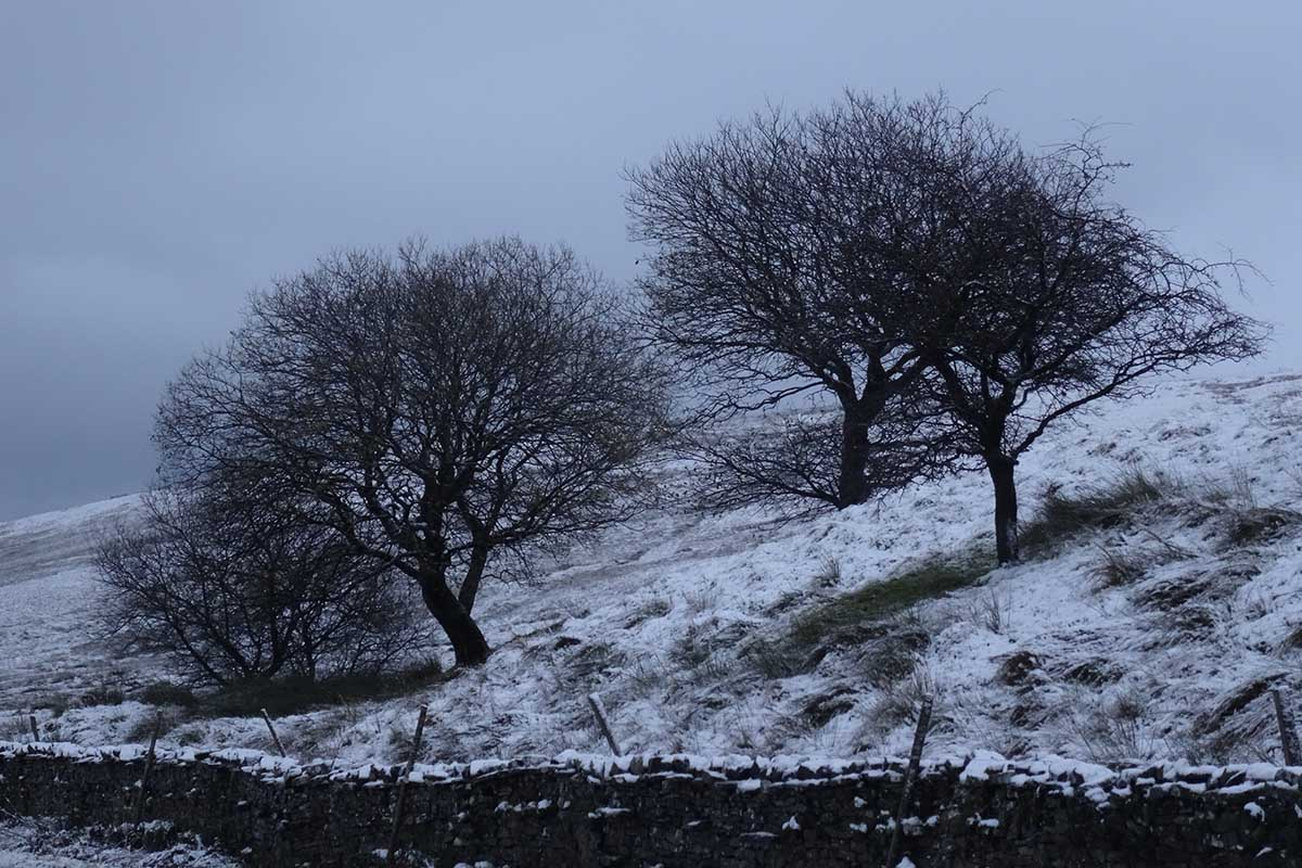Lauras loom snowy landscape tree yorkshire