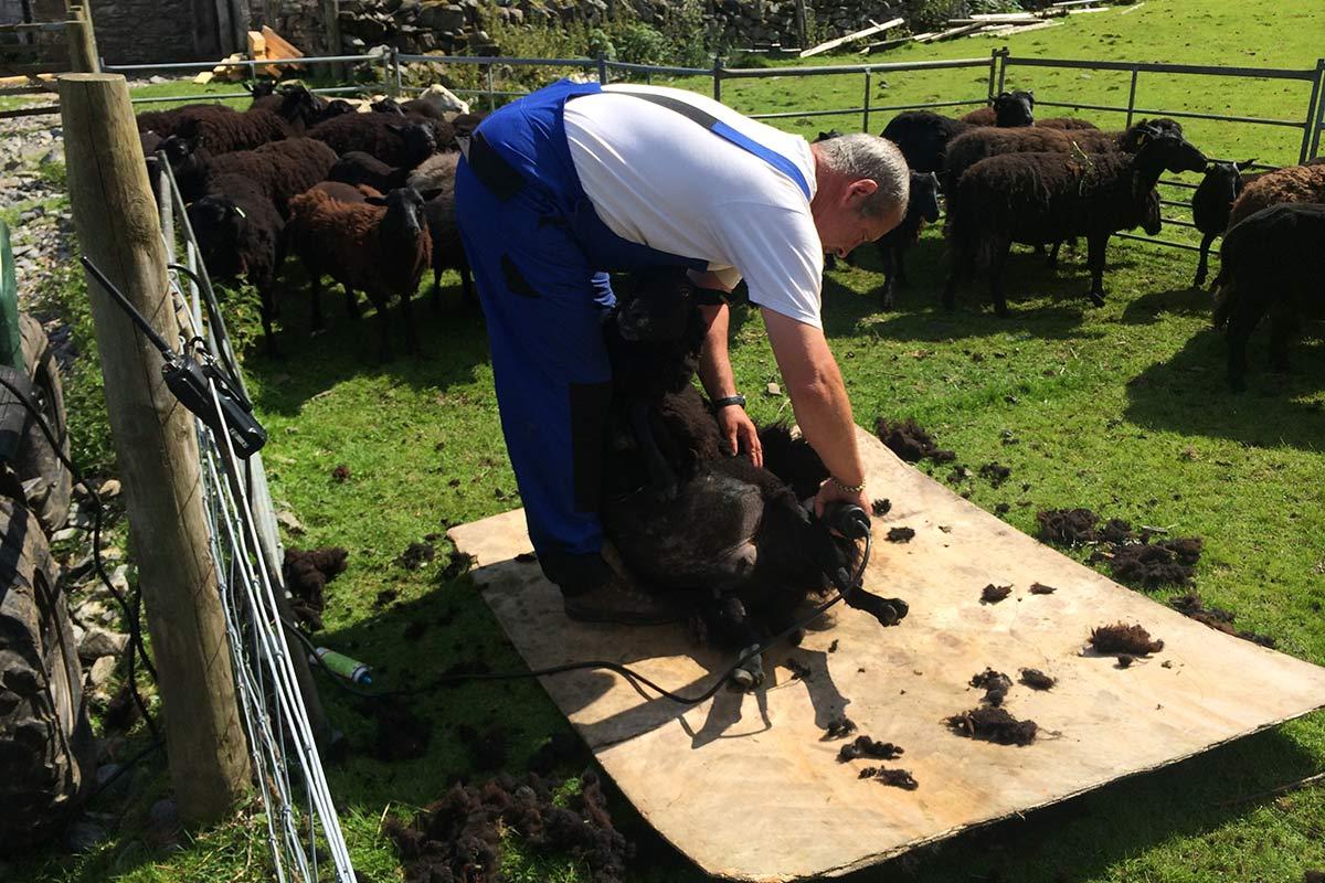 Laura's Loom, Weaving Process, Sheering